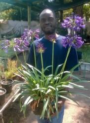 Agapanthus Poppin'Purple ('MP003') (1)