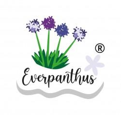 Everpanthus-logo