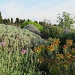 Jardin sec Filippi