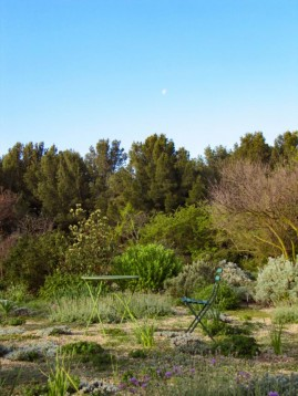 Mediterranean Plants Cover_MR