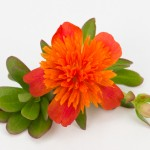 Portulacca Duna Double Orange