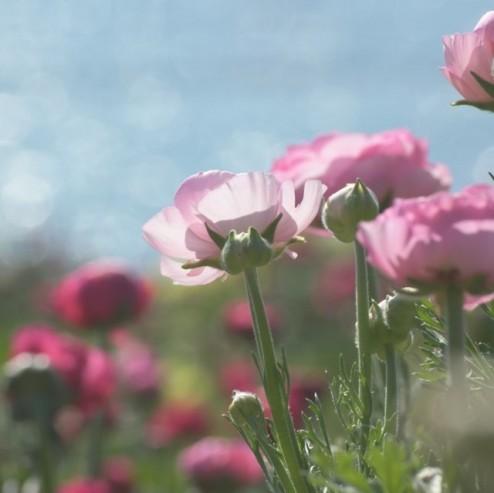 Movimento del fiore