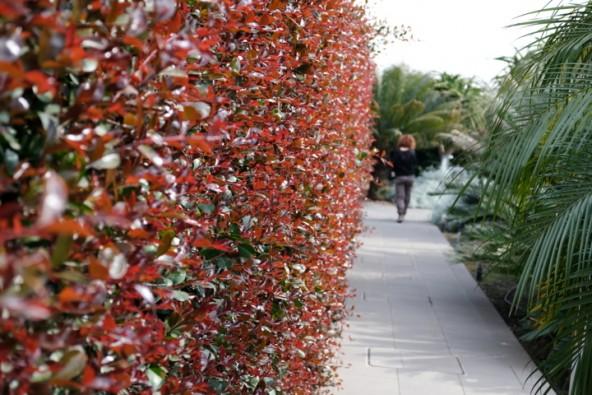 Perfetto per giardini mediterranei