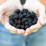 Frutti Freschi